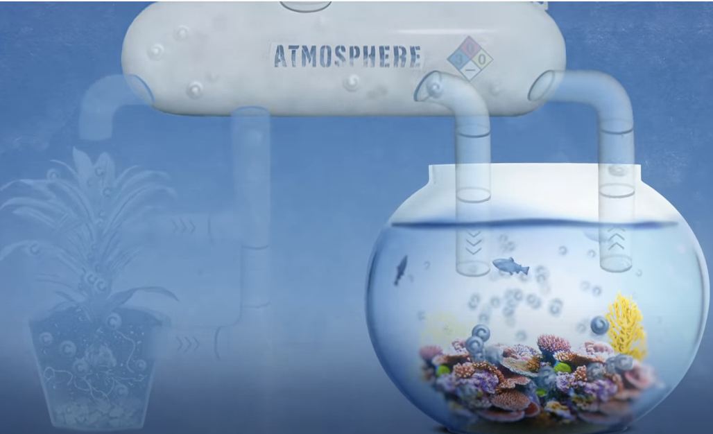 Video: How Carbon Affects Nearly Everything on Earth – Including Our Future