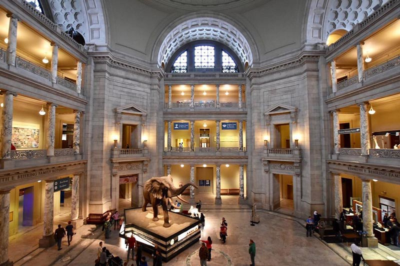 Get involved with the National Museum of Natural History